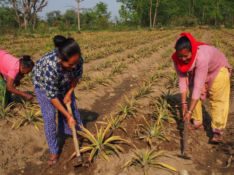 Livelihoods for Dalit Women in Chitwan